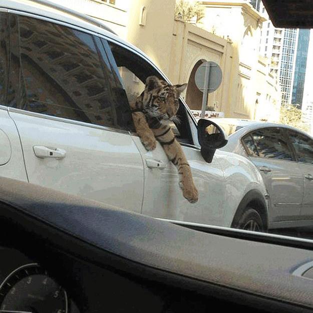 cosas que solo verás en Dubai