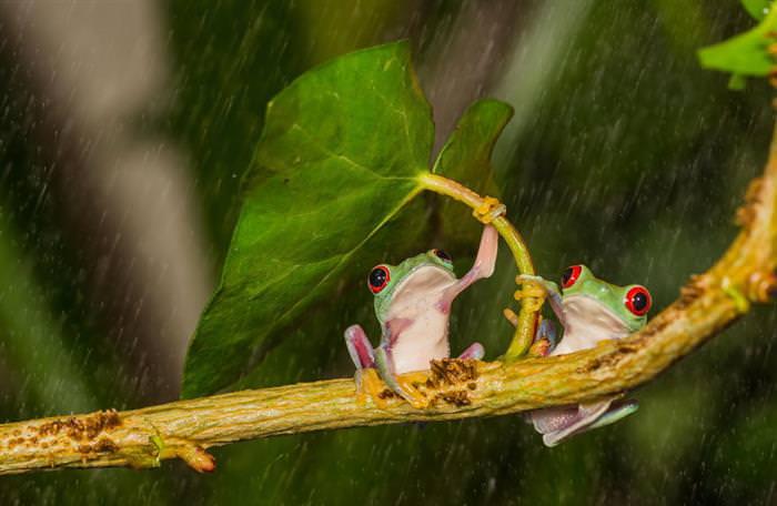 paraguas animales