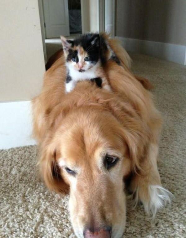 dominancia perros y gatos
