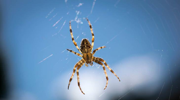casa libre de arañas