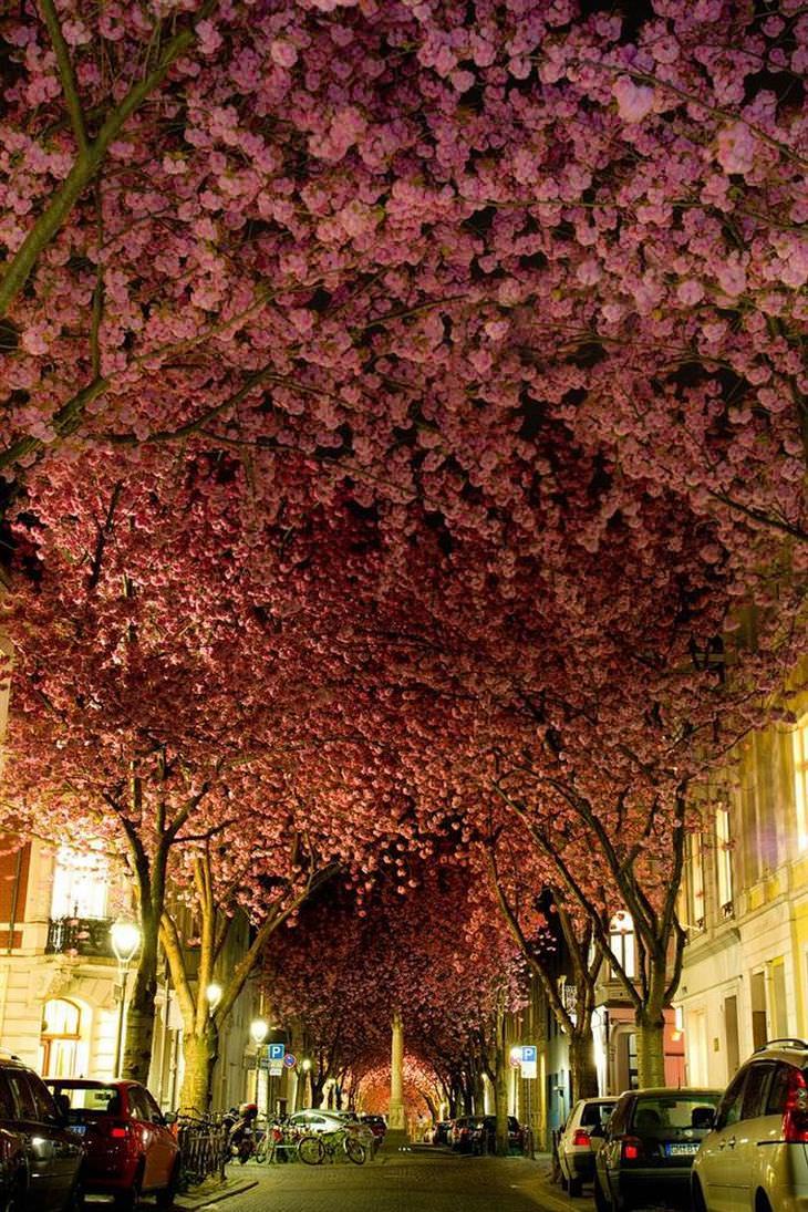 calles repletas de árboles