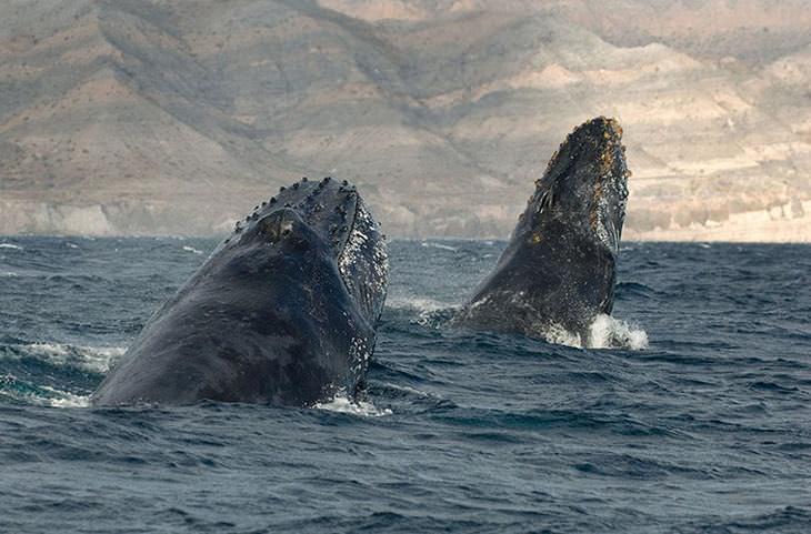 ballenas y delfines imágenes