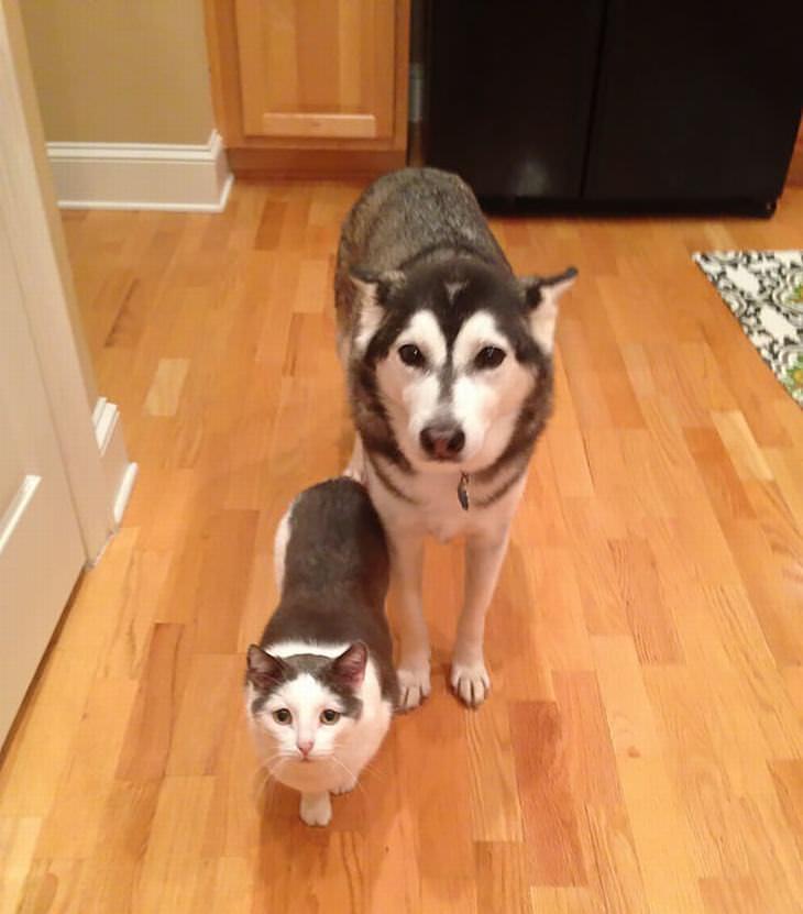 animales gemelos de diferentes especies