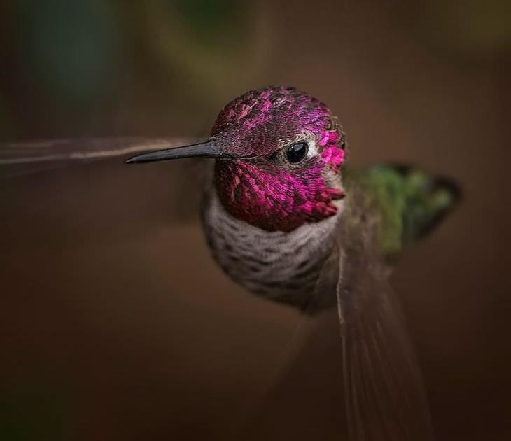 la belleza del colibrí