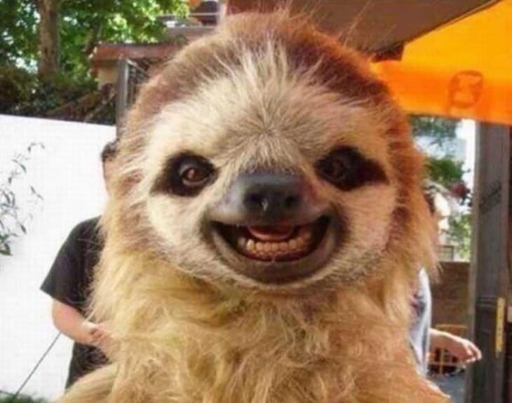 animales que sonrien