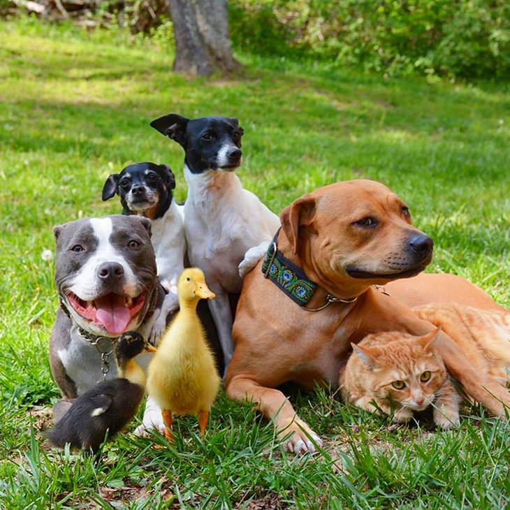 familia adoptó animales durante 10 años