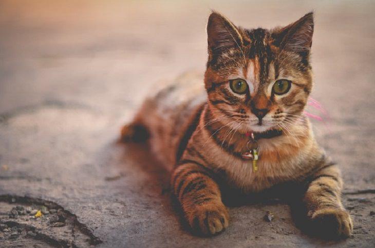 chiste gato que vuelve