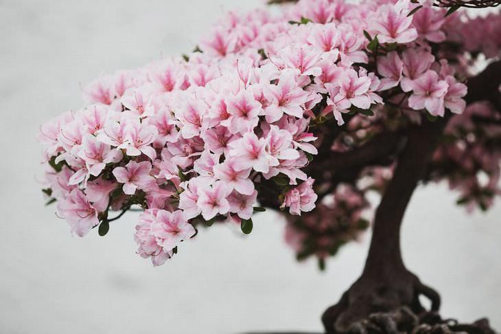 fotografo belleza bonsai