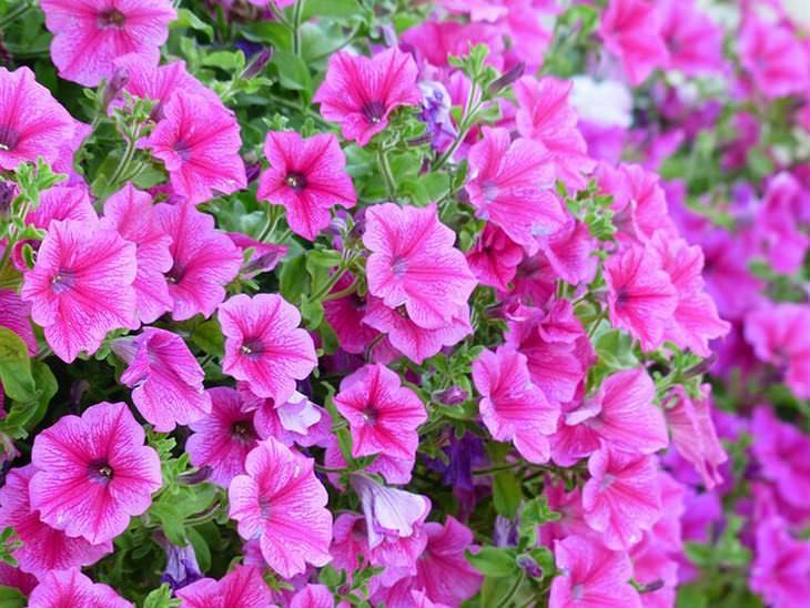 10 plantas para evitar insectos en tu jardín