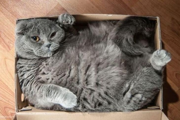 excentricos gatos