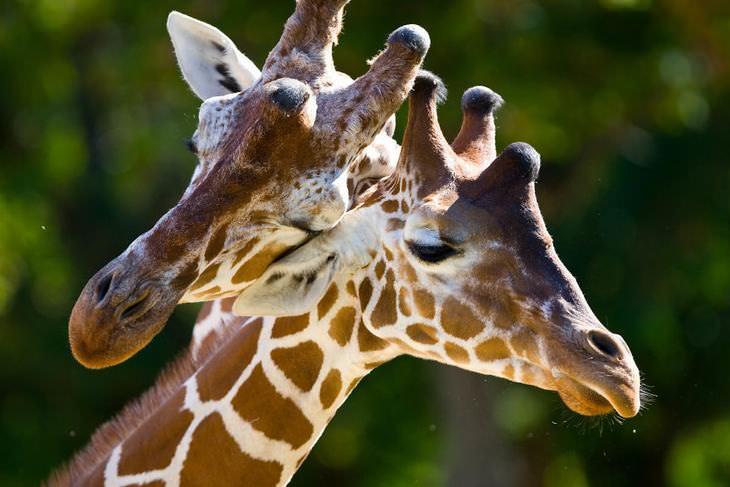 animales que muestran su amor