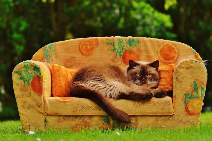 razones para levantarte del sofá