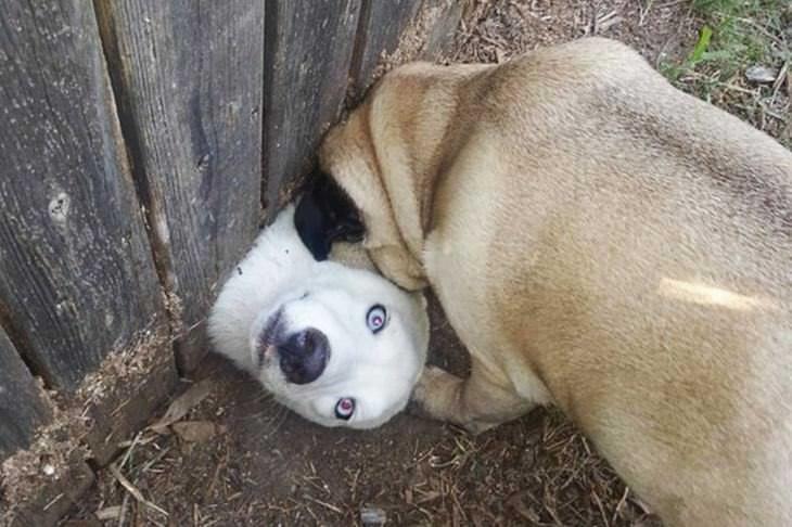 perritos demasiado curiosos