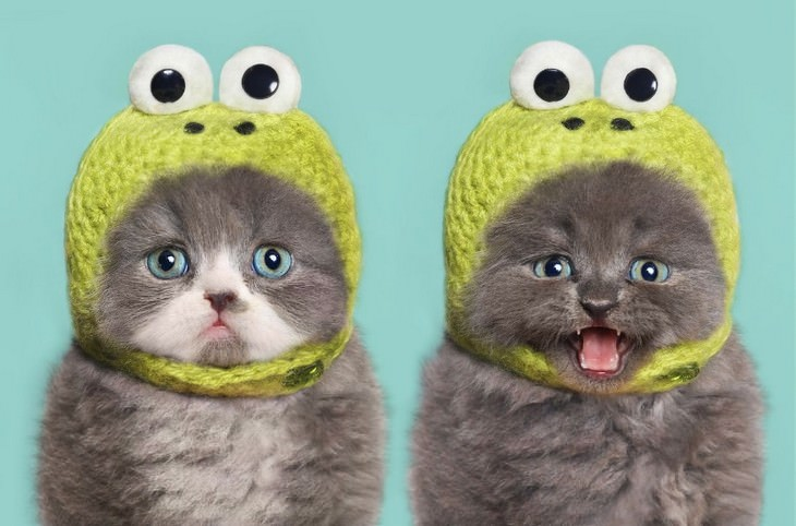 gatitos con mucho estilo