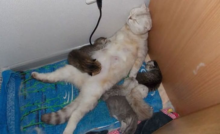 la maternidad de los animales