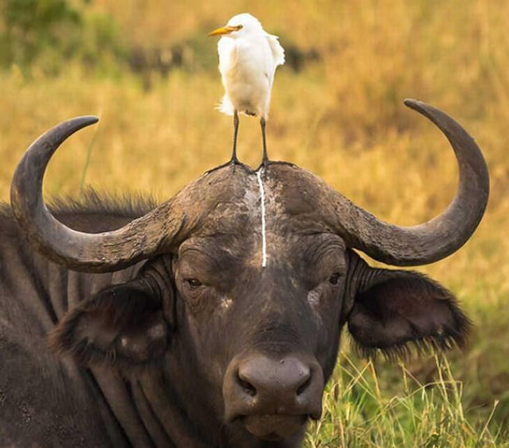 divertidas fotos animales