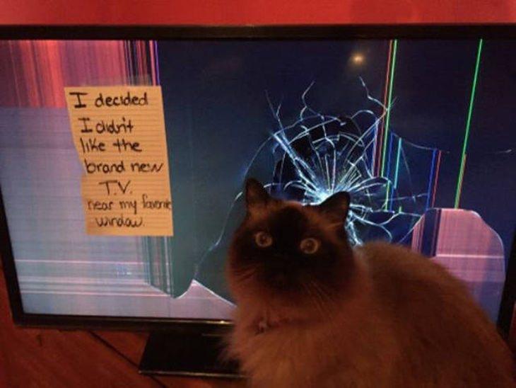 15 fotos de gatos siendo gatos