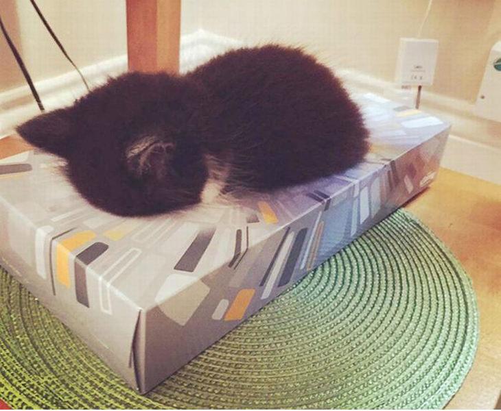 animales que duermen en cualquier lugar