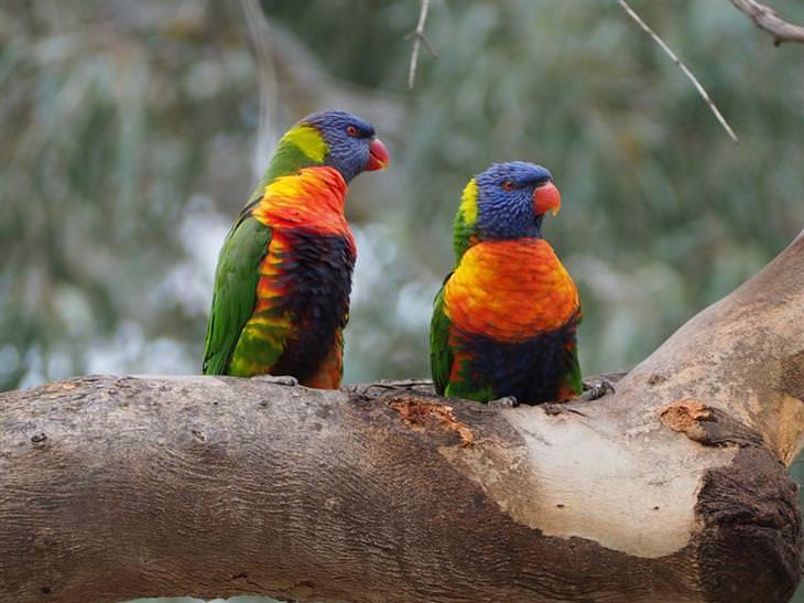 hermosos pájaros de colores
