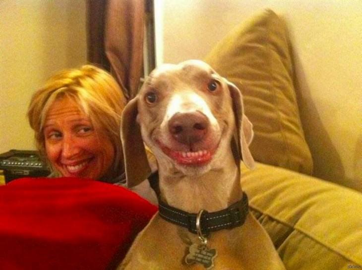 animales sonrientes