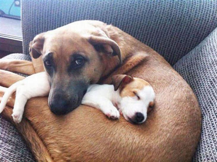 18 fotos de perros enamorados