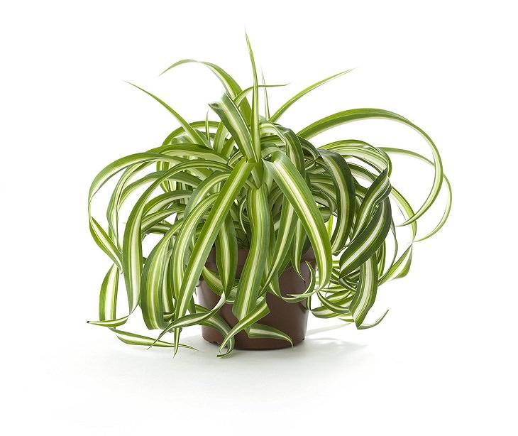 10 plantas de interior