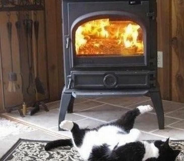 divertidos gatos