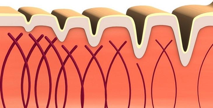 funciones colágeno