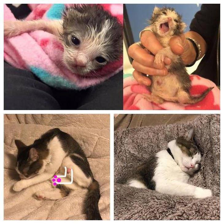 fotos animales antes y después adopción