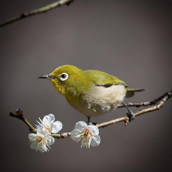 naturaleza en Japón