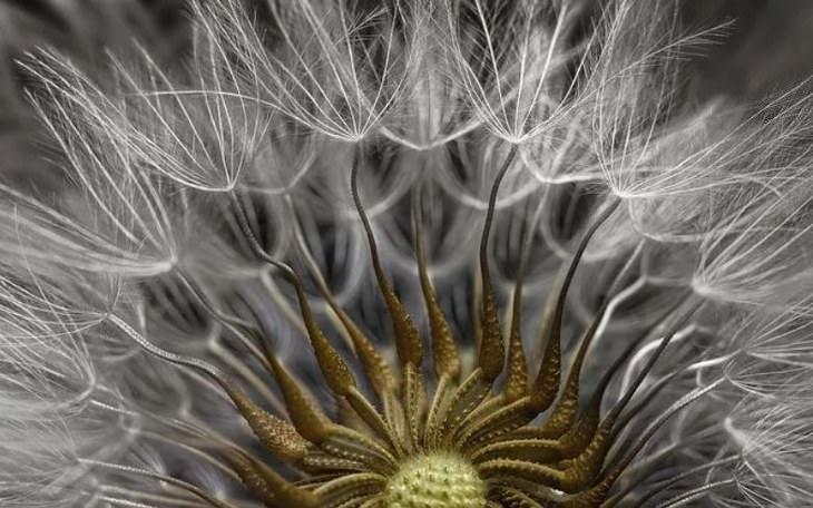 fotografías microscópicas