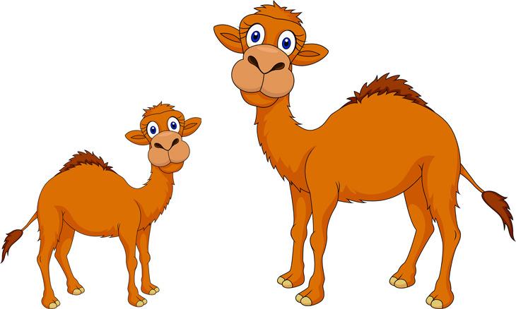 camello y su madre