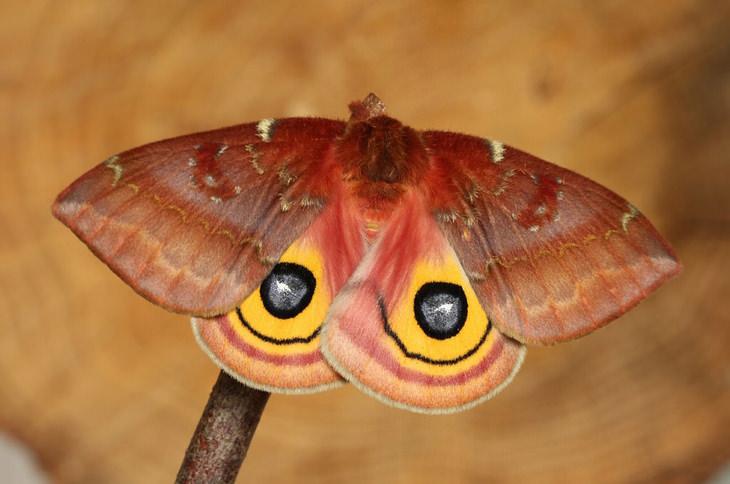 mariposas y orugas