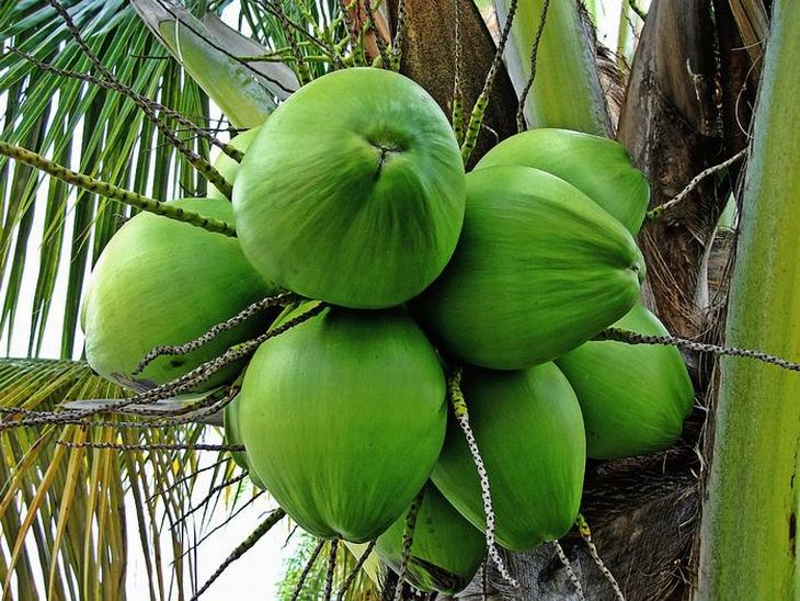 beneficios agua coco