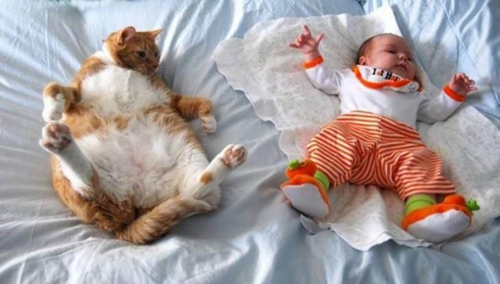 posiciones gatos para dormir