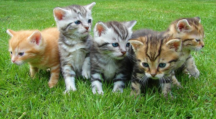 60 datos gatos