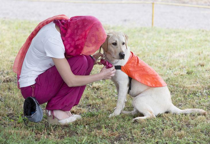16 datos sobre los perros