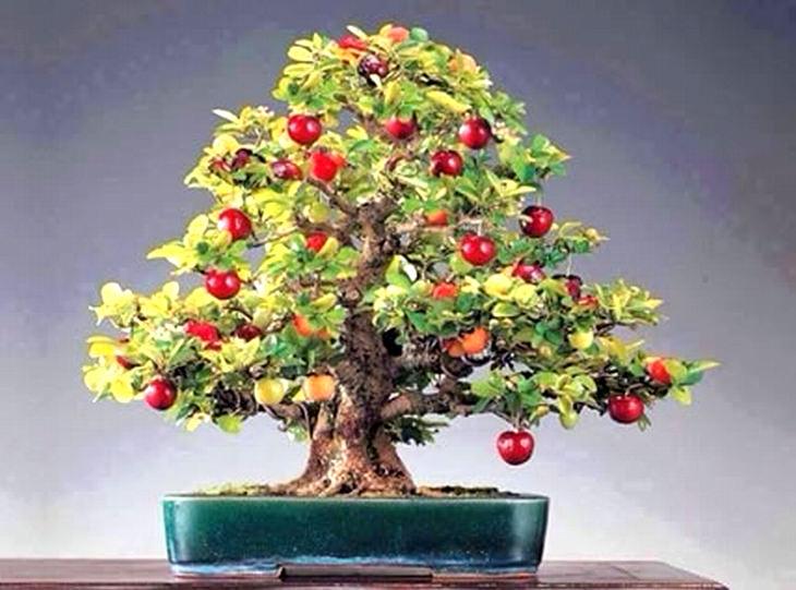 guía para plantar bonsai
