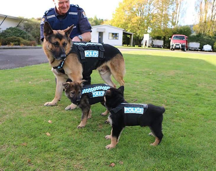 cachorros primer día de trabajo