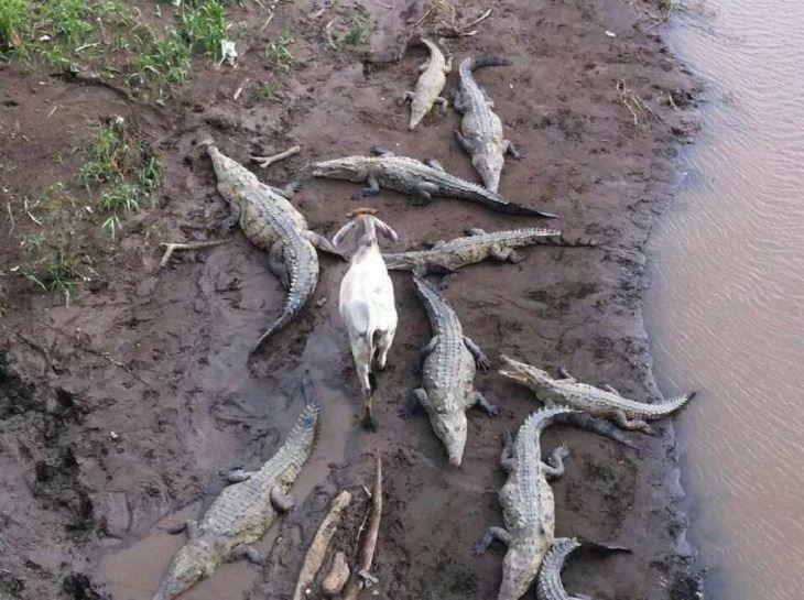 animales que no se preocupan