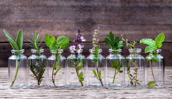 guia crecer hierbas agua
