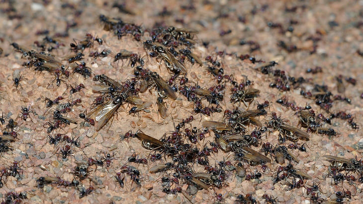 hormigas: increíbles animales