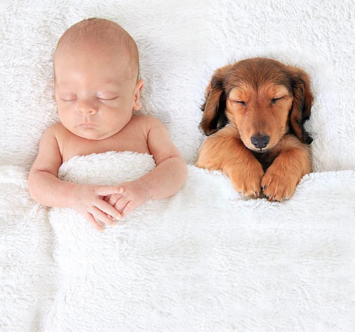 niños y perros siesta