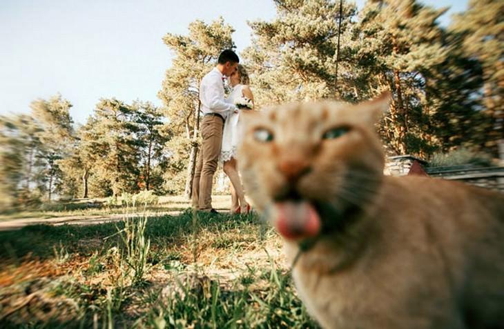 gatos que arruinan fotos