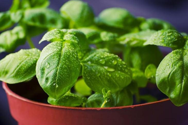 10 vegetales crecer casa