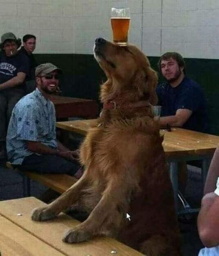 14 perros adorables