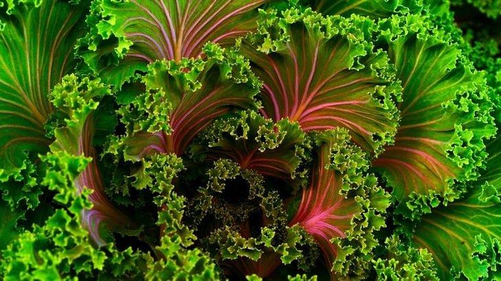 10 vegetales maceta