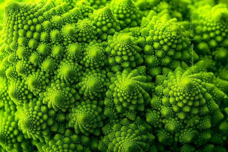 plantas formas geométricas