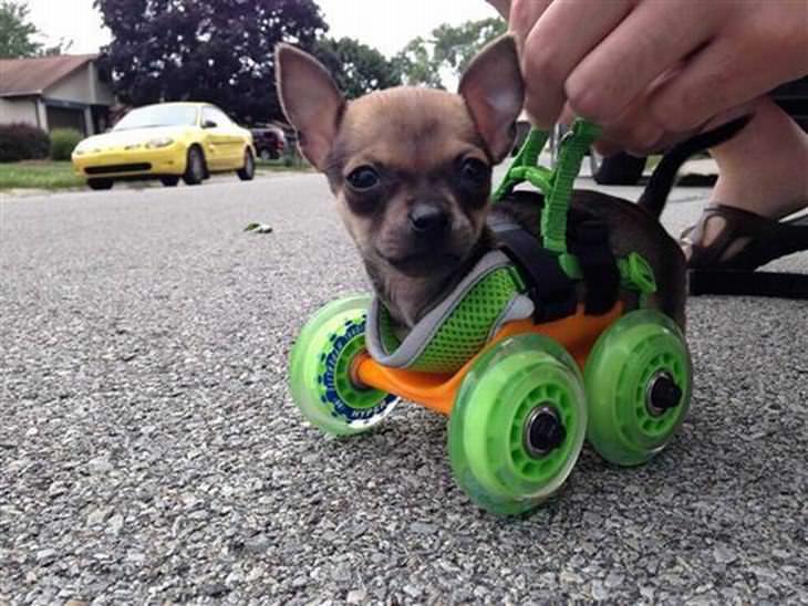 15 ideas dueños perros