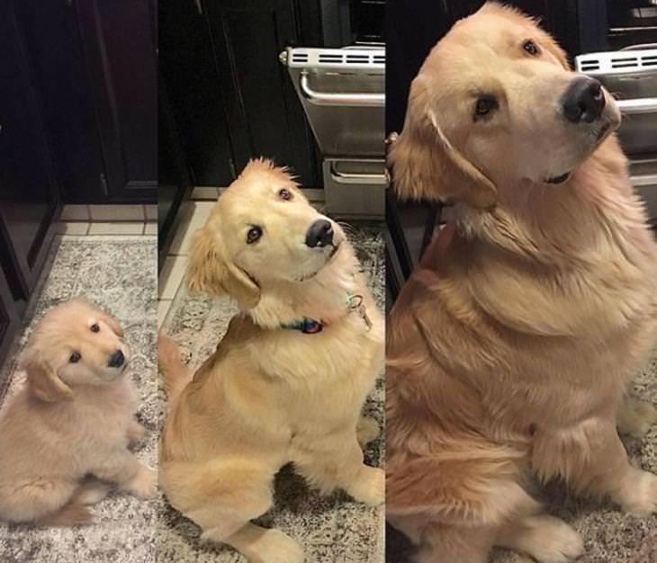 20 fotos perros antes y después